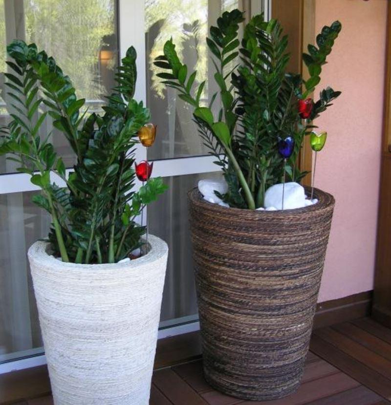 Návrh květinové výzdoby interiéru a péče o květiny Praha