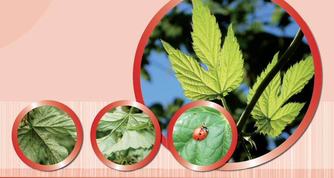 Ochrana rostlin – herbicidy a fungicidy s jistým účinkem