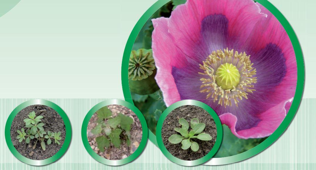 Ochrana rostlin - rychlý účinek