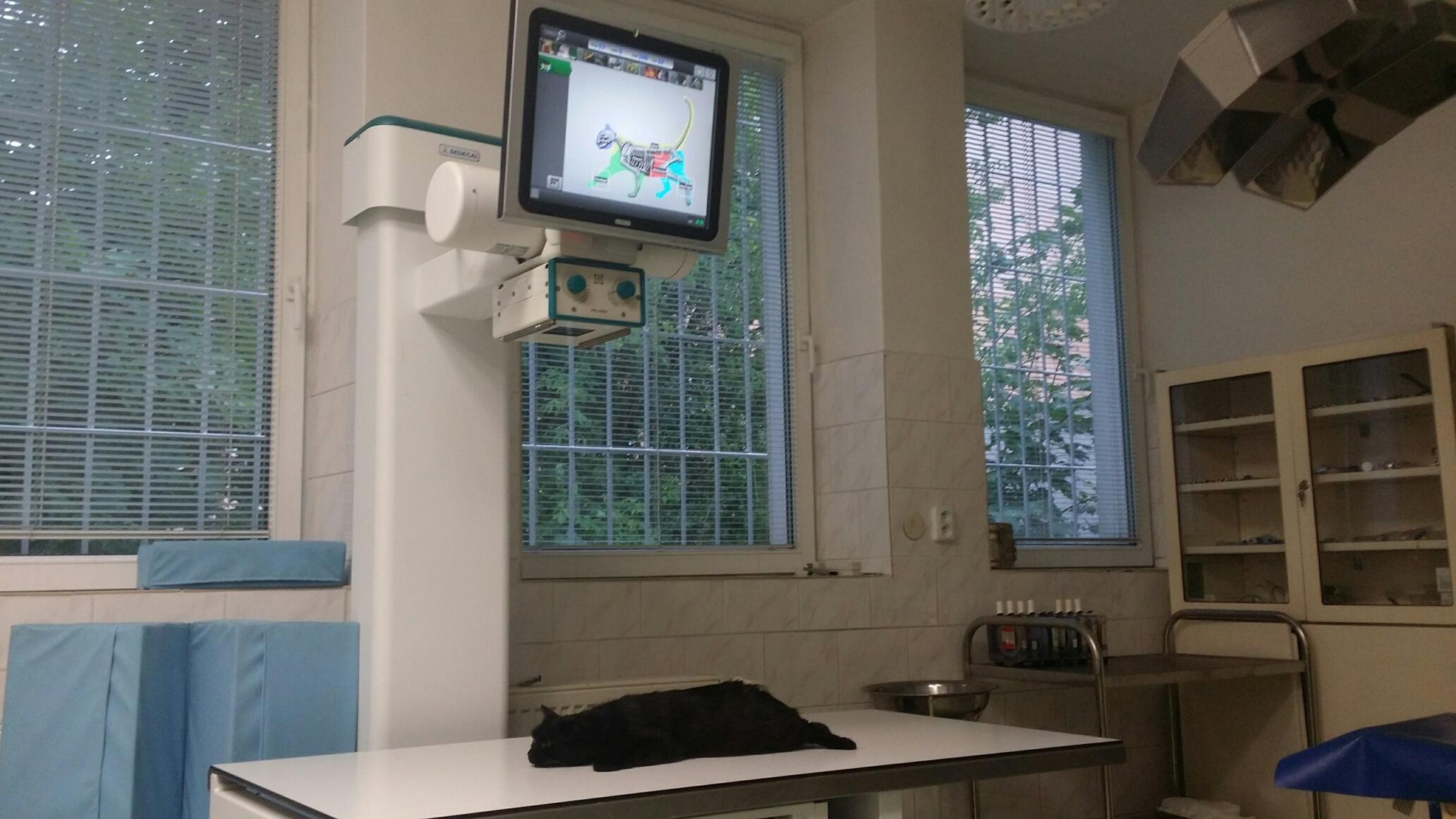 Veterina, veterinární ambulance, ordinace - kompletní péče pro malá zvířata