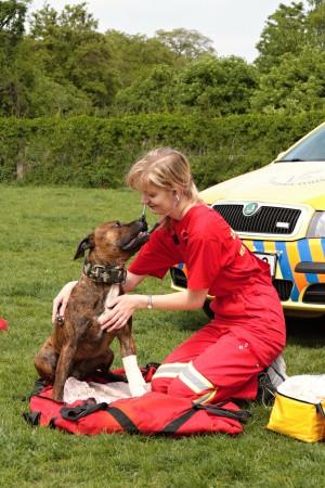 Záchranná veterinární služba z Prahy fungující 24 hodin denně, první pomoc pro domácí zvířata