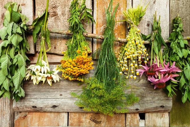 Velký výběr bylin a léčivých produktů v přírodní lékárně Vsetín - čaje, kapky, kosmetika, sirupy