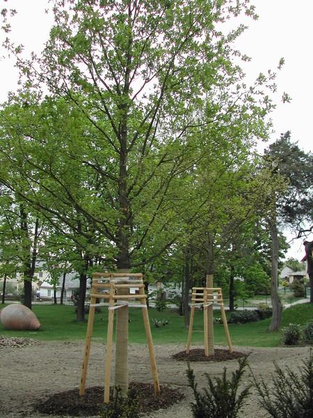 Odborný ořez a ošetření stromů – snižování či zužování, prořezávání ovocných stromků