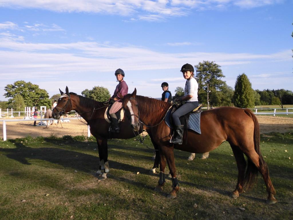 Výcvik koní pod vedením zkušených trenérů