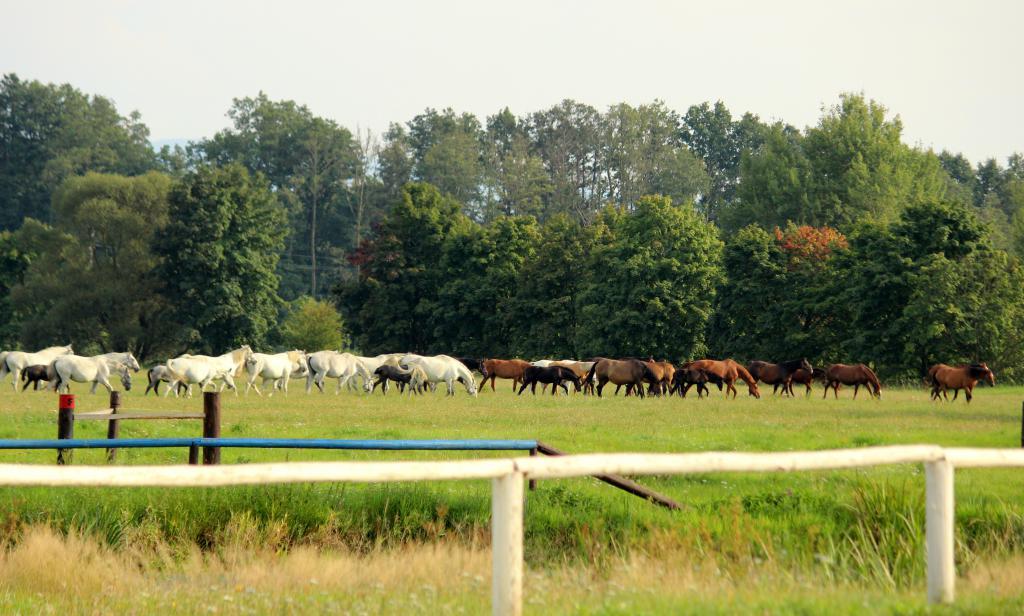 Chov koní Nebanice - pastevní plochy