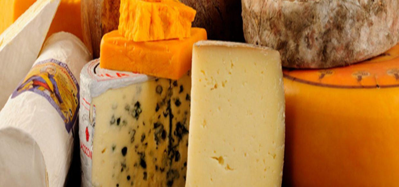 Mražené i nemražené potraviny, mléčné výrobky, distribuce a zásobování škol a restaurací