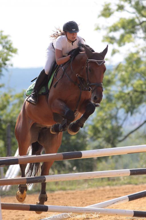 Prodej koní na parkurové skákání i k drezuře Nebanice
