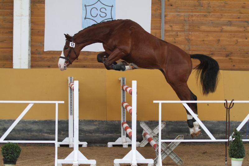 Prodej sportovních i rekreačních koní Nebanice