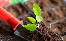 Rostlinná a živočišná výroba Kralovice