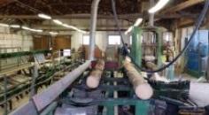 Těžba, pořez dřeva, kulatiny, prodej, výroba řeziva
