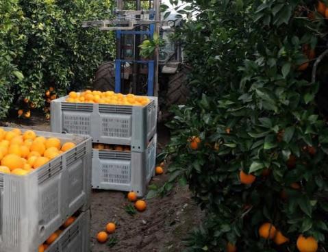 Prodej plastové přepravky na ovoce
