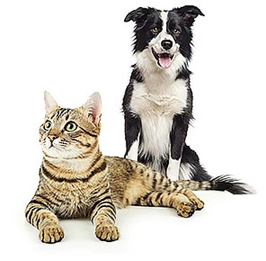 Soukromá veterinární klinika, prevence a léčba malých zvířat, skotu i koní