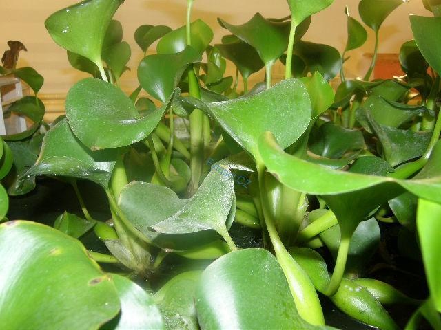 Rostliny do akvária a péče o ně