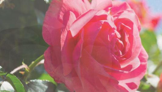 Rozpustná hnojiva s vysokým obsahem živin – dlouhodobá výživa pro Vaše rostliny