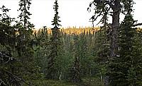 Správa městských lesů Most, příspěvková organizace, prodej dřeva jehličnatého a listnatého, prodej sena