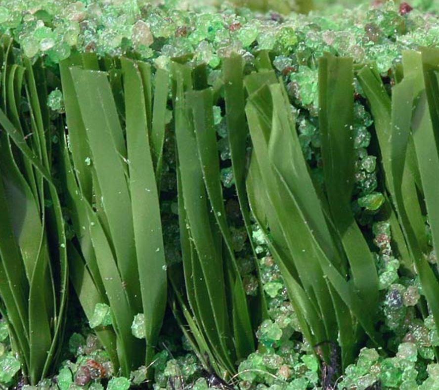 Umělá tráva s volitelnou hustotou vpichů