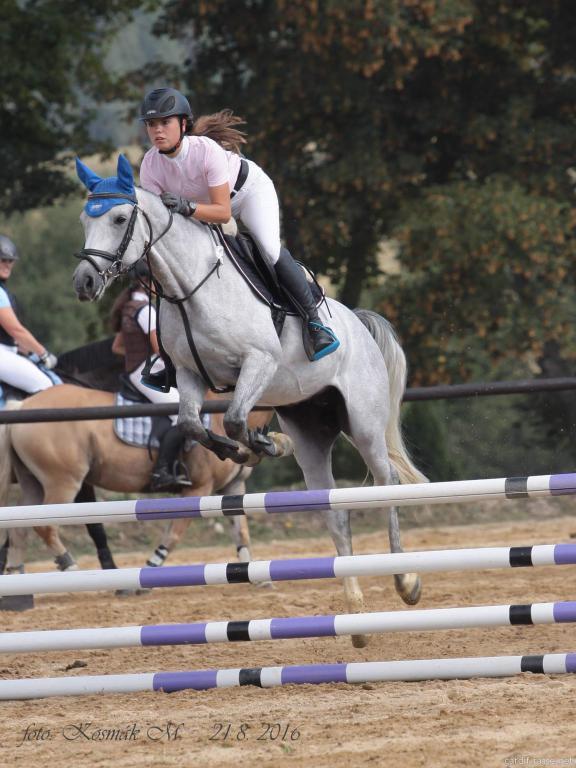 Parkurový, drezurní, chovní, kočároví a hobby koně na prodej