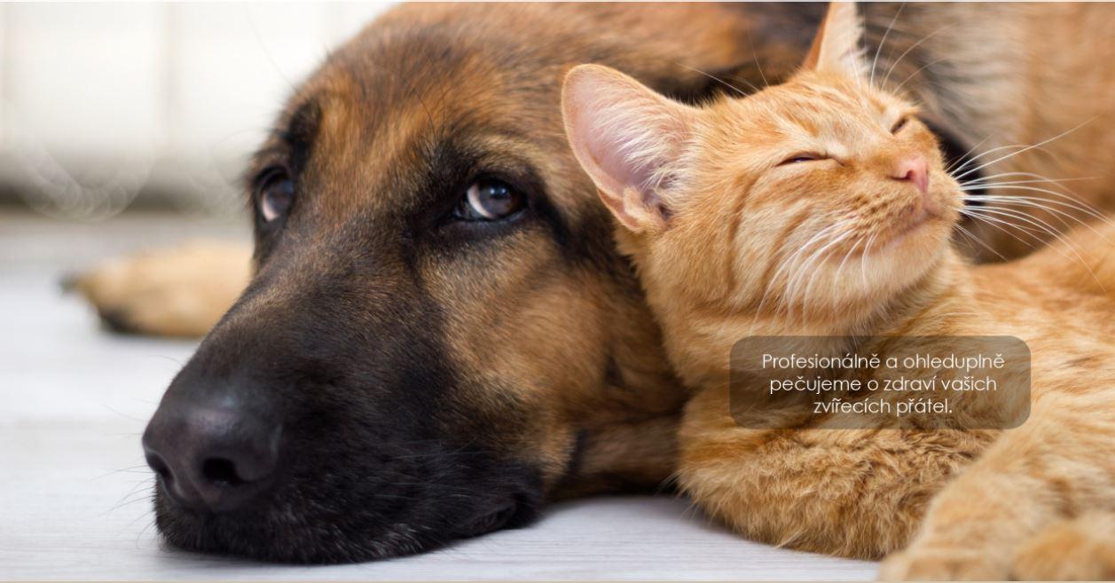 Dermatologická veterinární poradna -pomáháme s onemocněním kůže a srsti zvířat