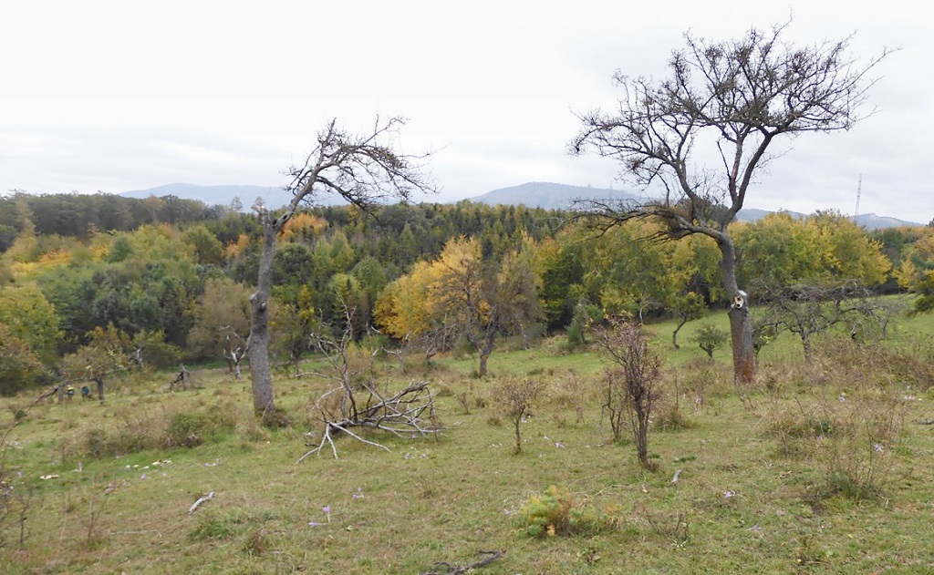 Obnovy a zakládání extenzivních sadů, travních porostů a luk