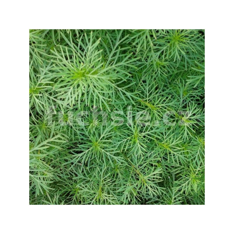 Zahradnictví Petro - výběr bylinek a léčivek