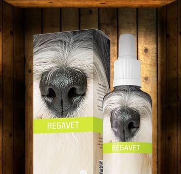 Přírodní veterinární prostředky Energy pro zdraví a vitalitu zvířat – při léčbě i prevenci