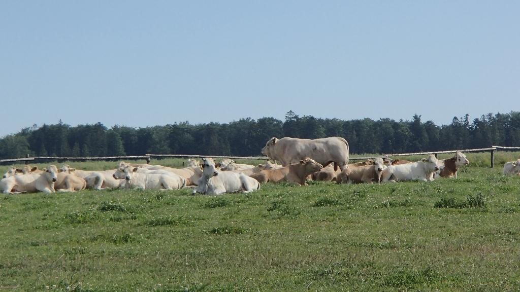 Produkce mléka Opava