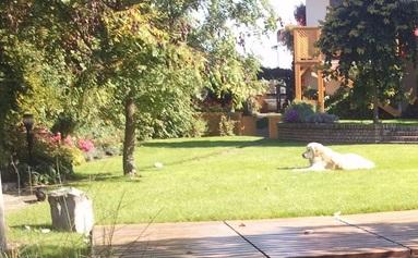 zahrada s místem pro relaxaci
