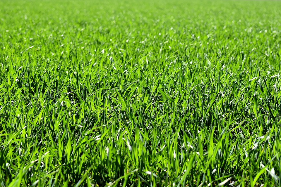 Prodej osiva travní směsi