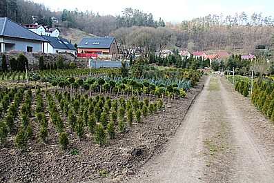 Zahradnictví Křeček Petr Křeček, pěstování a prodej okrasných dřevin, stromů a keřů