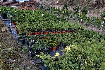 Zahradnictví Petr Křeček, okres Beroun, dodání okrasných rostlin, květin, stromů, keřů substrátu, hnojiva