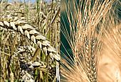 Rodinná farma, rostlinná výroba, pěstování ekologického ovoce