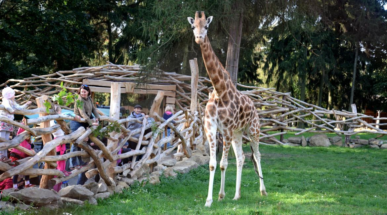 Příjemný den s exotickými zvířaty, Zoo Olomouc
