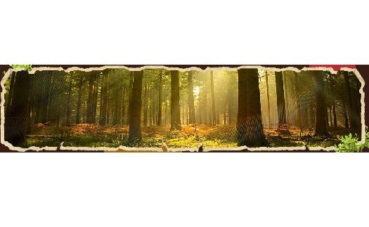 Lesnické služby pro obce i občany, kácení stromů, prodej palivového dřeva