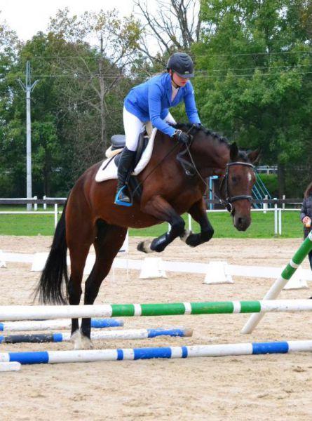 Drezurní i parkurový výcvik jízdy na koni