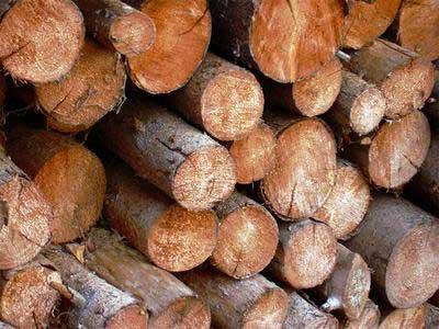 Výkup dřeva praha