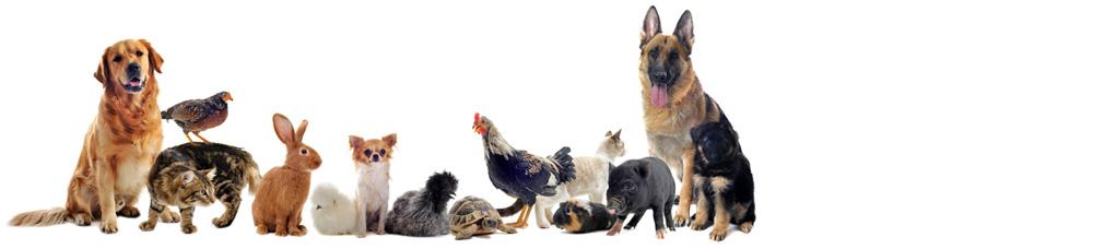 Veterinární klinika a ordinace, léčba malých, větších i exotických zvířat