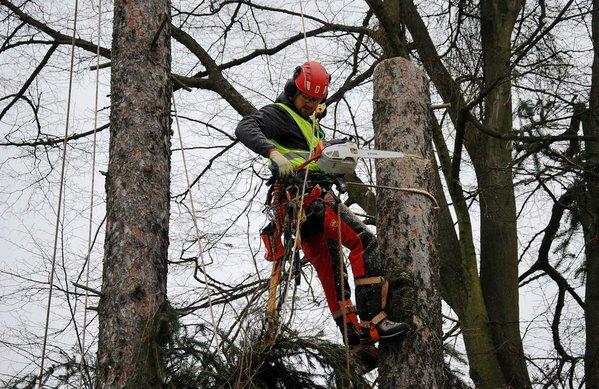 Bezpečnostní řezy stromů a odstranění suchých větví