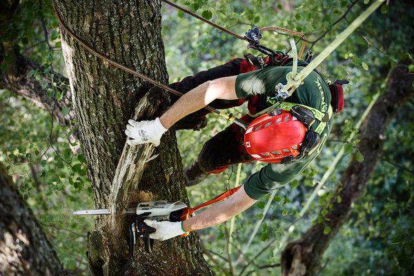 Odborné řezy stromů