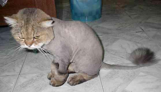stříhání koček Zlín, Otrokovice