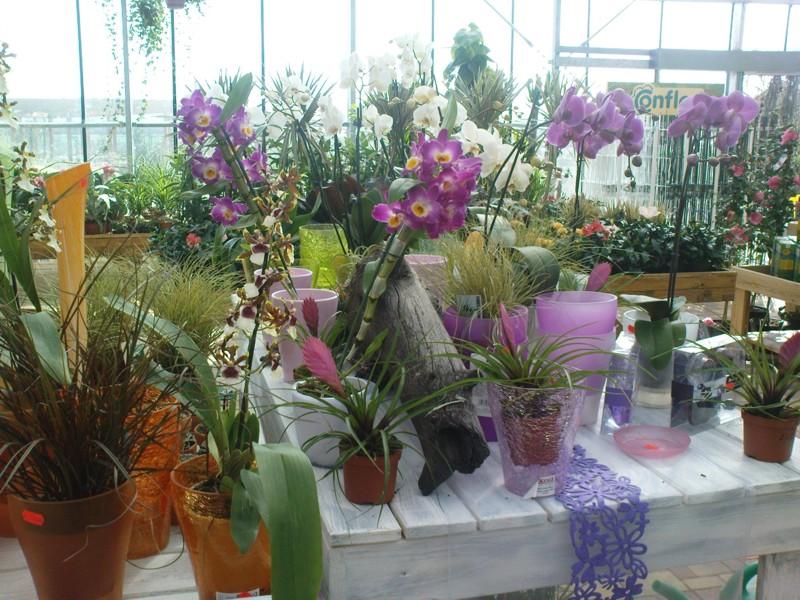 Prodej květin Čáslav