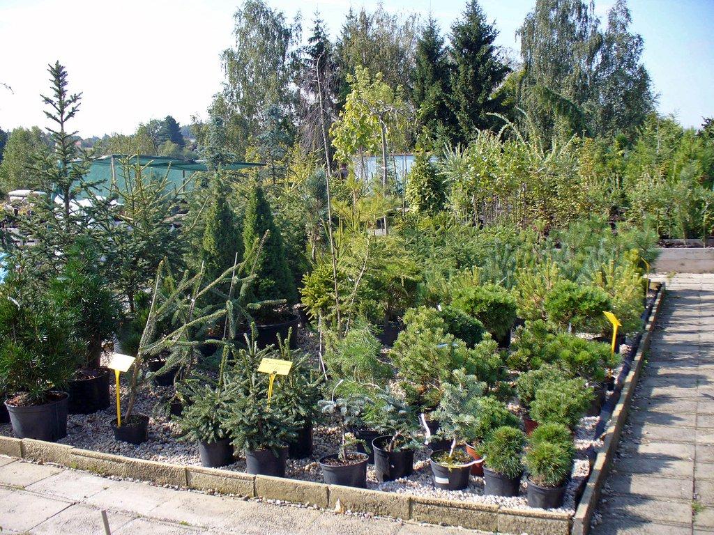 Prodej ovocné stromky, jehličnany, listnaté stromy, dřeviny.