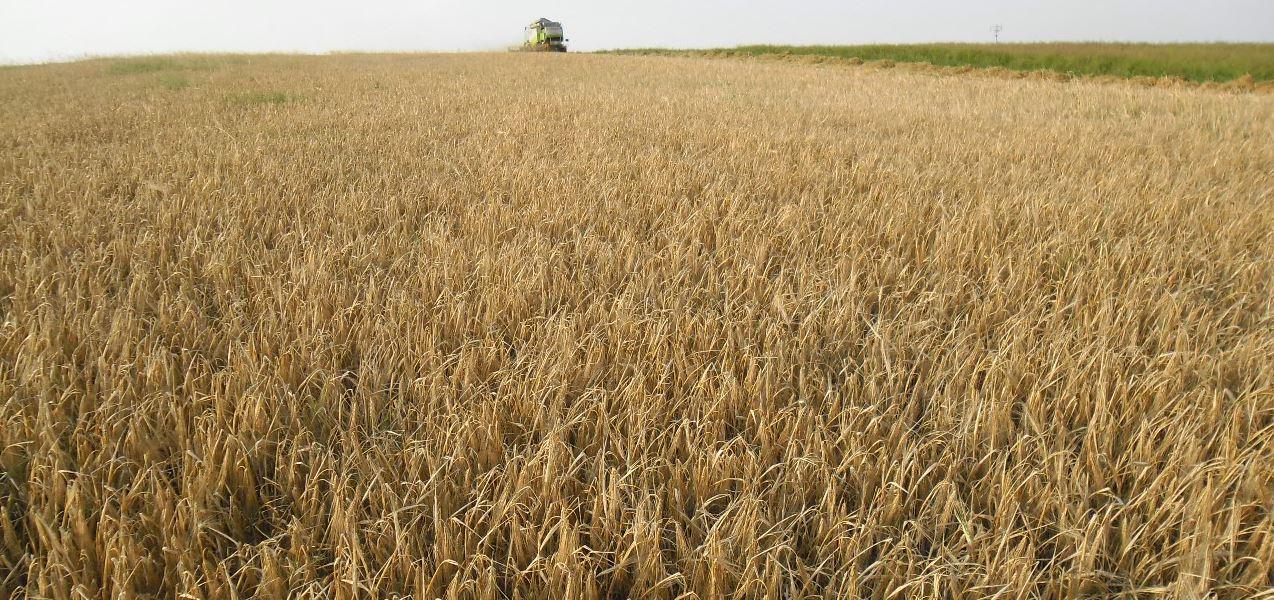 Rostlinná a živočišná výroba, chov skotu, prodej obilí a slámy, středisko mechanizace