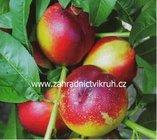 Zahradnictví, e-shop dřevin, stromků, subtropických rostlin, květin