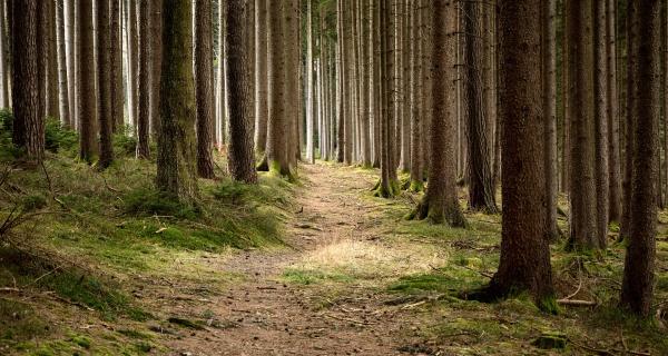 Lesnické služby, rizikové kácení stromů, zalesňování zemědělských půd, prodej palivového dříví