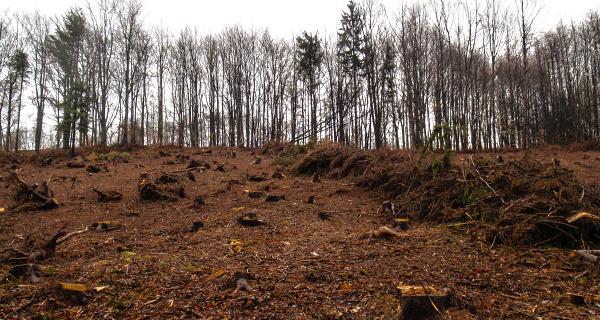Komplexní obhospodařování lesních porostů moderním způsobem, Lesy Tyl Ivan Tyl