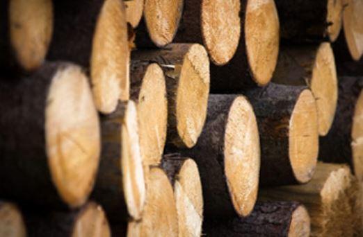 Pilařská výroba, prodej dřeva, kulatina, palivové dříví, dřevěný masiv, palubky, stavební řezivo