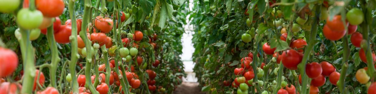 Düngemittel in Tabletten für die Pflanzenernährung und ihr schnelles Wachstum - Verkauf Tschechische Republik