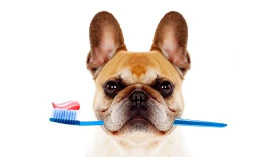 Zubní ordinace pro psy, kočky a drobné savce – komplexní péče o chrup Vašich mazlíčků