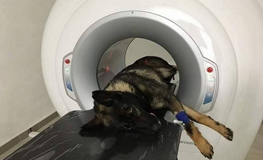 CT počítačová tomografie pro psy a kočky ve špičkovém 3D a 5D zobrazení