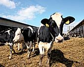 Rostlinná a živočišná výroba, chov skotu a prasat, produkce mléka